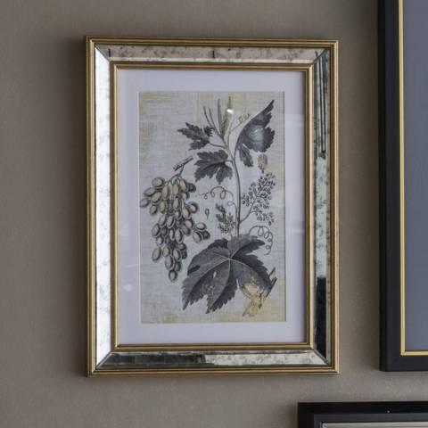 Gallery Set of 2 Braun Botanical Studies 30x40cm