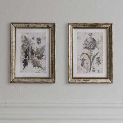 Gallery Set of 2 Fremont Botanical Studies Framed Art