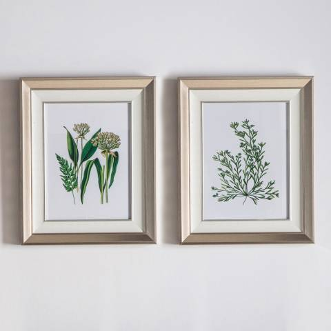 Gallery Set of 2 Botanical Spring I Framed Art 45x55cm
