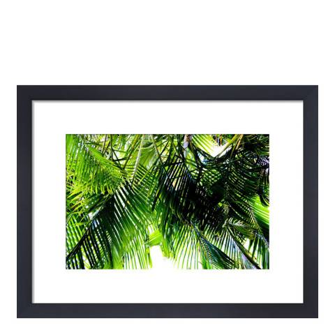 Paragon Prints Jungle, Deborah Schenck, Framed Perspex Print 35.6x28cm
