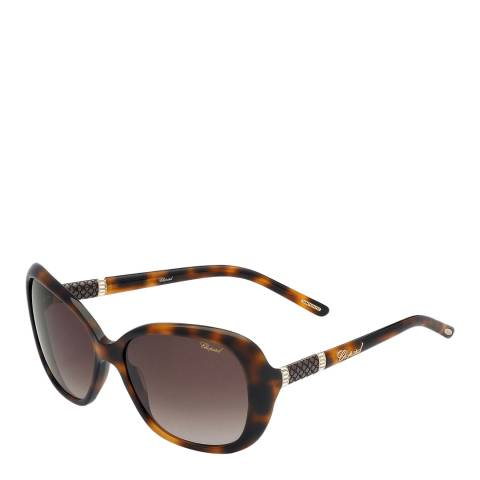 Chopard Women's Shiny Brown Havana Sunglasses