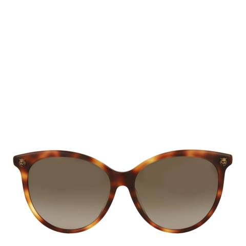 Gucci Womens Gucci Havana/Brown Sunglasses 50mm