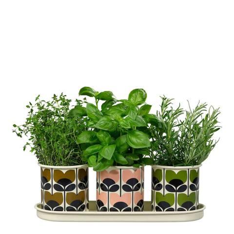 Orla Kiely 3 Herb Pots with Tray Climbing Rose