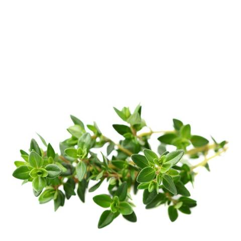Click & Grow Set of 9 Thyme Plant Pods