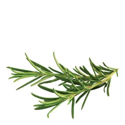 Click & Grow Set of 9 Rosemary Plant Pods