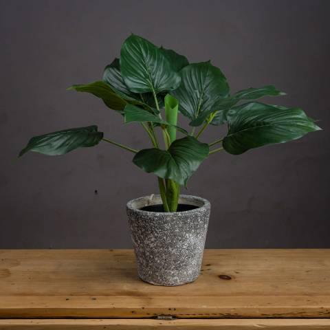 Hill Interiors Faux Scindapus Plant