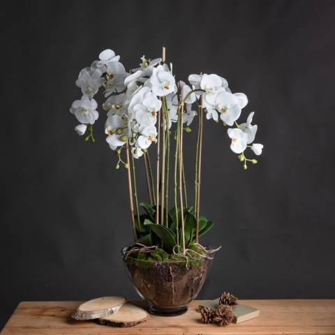 Hill Interiors Large White Orchid In Glass Pot