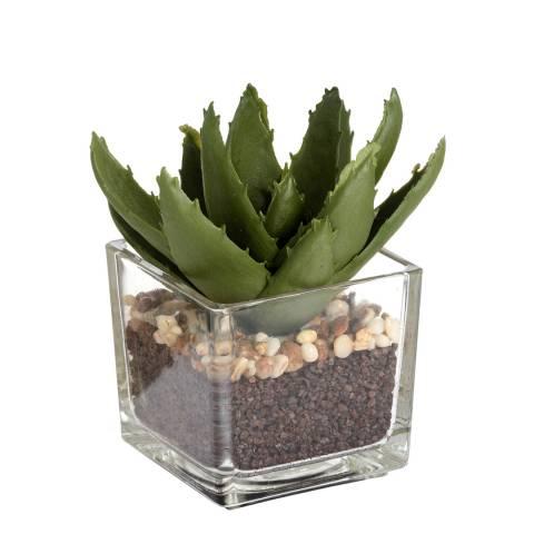 Hill Interiors Miniature Aloe Vera in Glass Pot