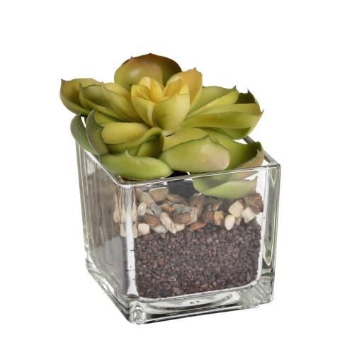 Hill Interiors Miniature Succulent in Glass Pot