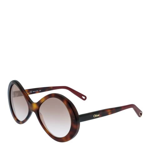 Chloe Women's Havana Chloe Sunglasses 55mm