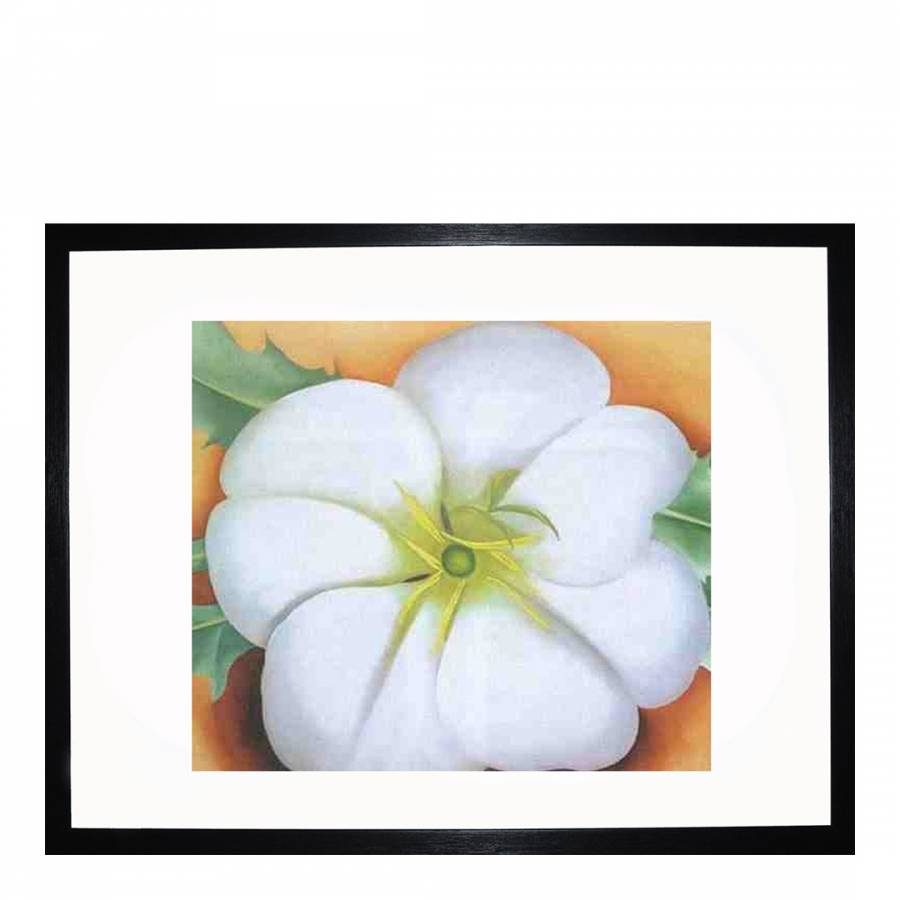 White Flower On Red Earth No 1 36x28cm Brandalley