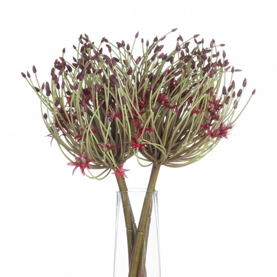 Image of Allium Stem