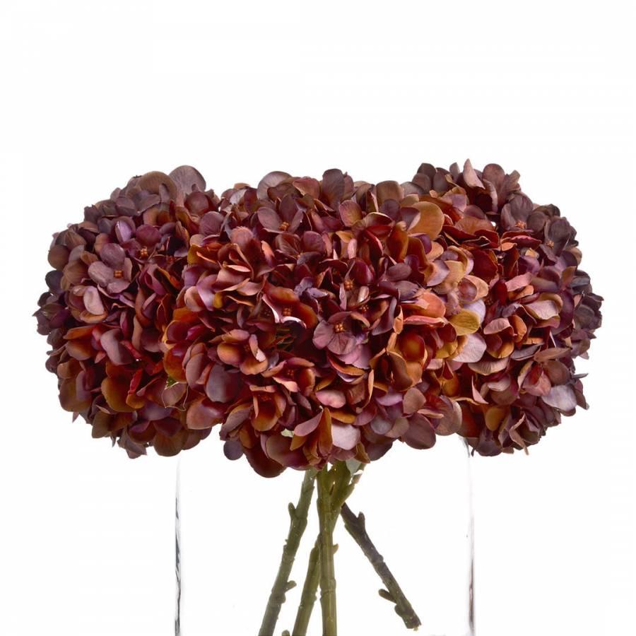 Image of Autumn Coffee Hydrangea Stem