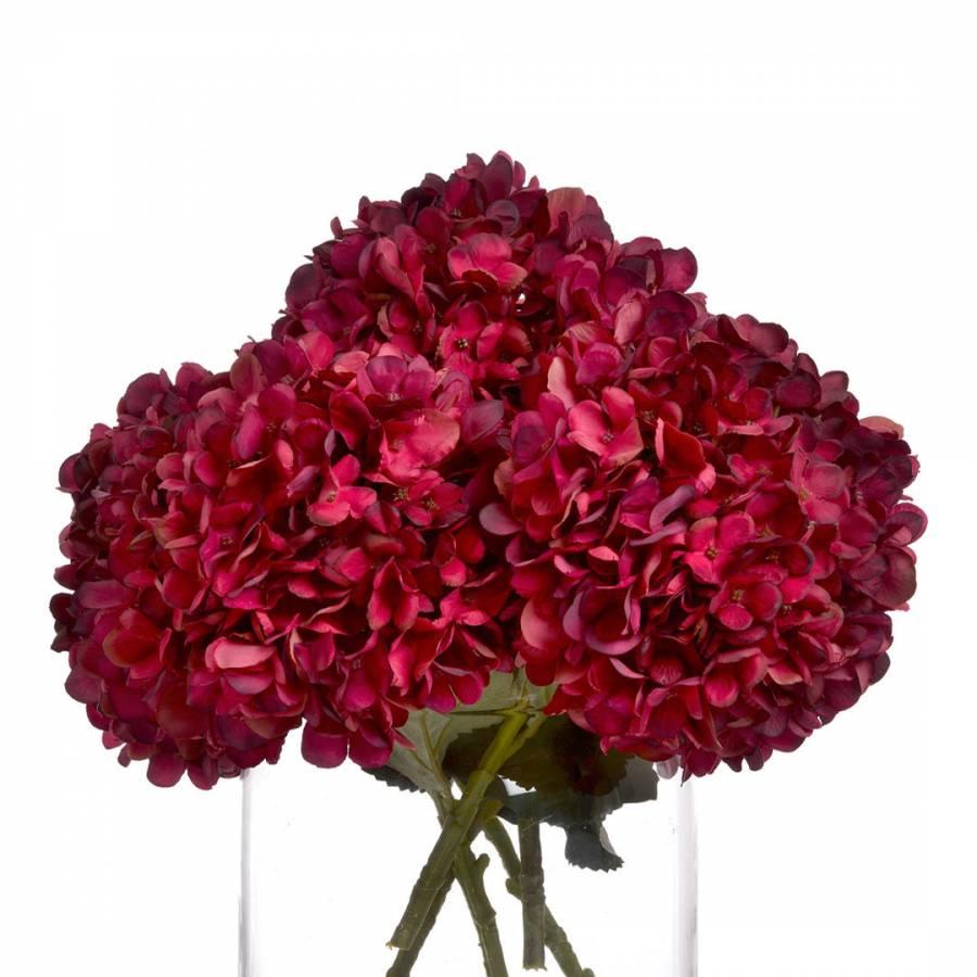 Image of Autumn Ruby Hydrangea Stem