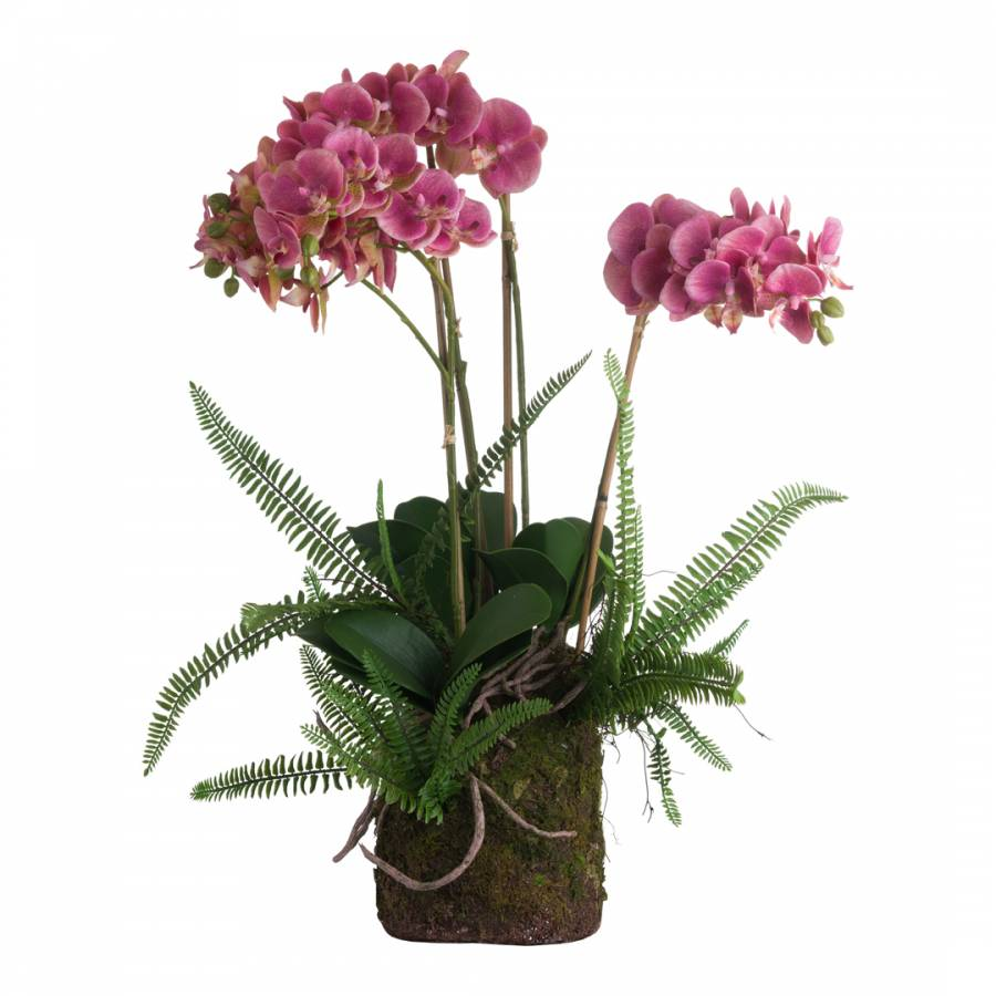 Image of Large Pink Orchid And Fern Garden In Rootball