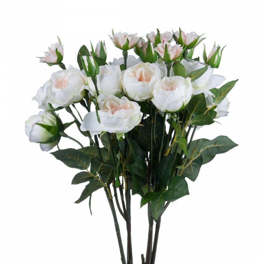 Image of Blush Garden Rose Multiple Stems