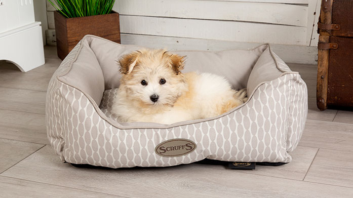Pet Boutique Treat your pooch to a new bed, sofa bed or cool beds from this pawsome collection from Scruffs.